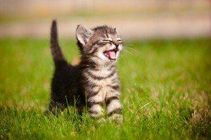 social media kitten